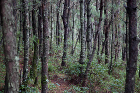 Wald ⎪ 森林 ⎪ Forest